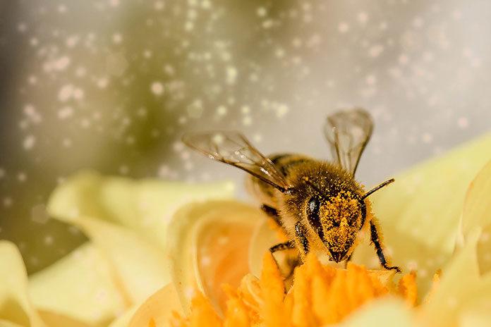 Dzikie pszczoły w ogrodzie – pożyteczni goście