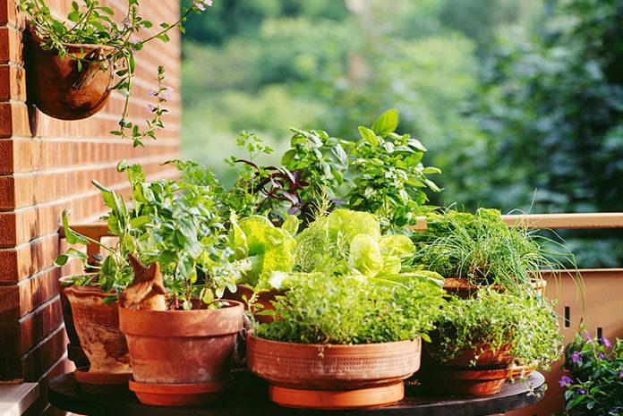 Jakie są najczęstsze choroby roślin doniczkowych?