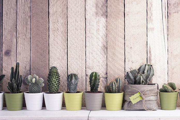 Sposoby na kłopotliwe rośliny